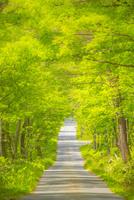 新緑のトンネル