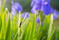 八幡湿原にて朝露と昆虫
