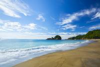 大浜海岸のウミガメおよび産卵地