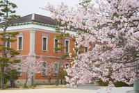 旧海軍兵学校生徒館と桜