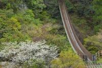 五家荘の樅木吊橋
