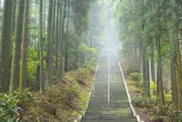 釈迦院御坂遊歩道にて日本一の石段