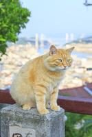 尾道の坂道にてノラ猫