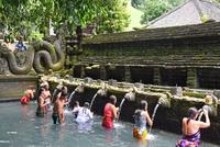 バリ島ティルタウンプル寺院の沐浴場 10685004937| 写真素材・ストックフォト・画像・イラスト素材|アマナイメージズ
