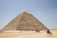 エジプト,ギザのピラミッドとラクダ