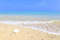波打ち際の白い貝殻