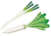 野菜 大根 葱