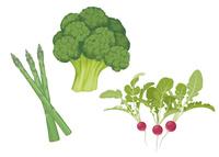 野菜 ブロッコリ アスパラ ラディッシュ