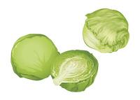 野菜 キャベツ レタス
