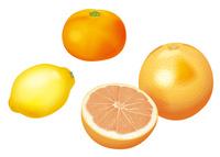 果物 グレープフルーツ レモン みかん