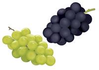 果物 ブドウ マスカット