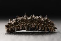 横から見た乾燥ナマコ 10724007293| 写真素材・ストックフォト・画像・イラスト素材|アマナイメージズ