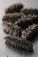 乾燥ナマコ(5個) 10724007298| 写真素材・ストックフォト・画像・イラスト素材|アマナイメージズ
