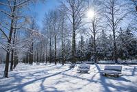 雪晴れの公園