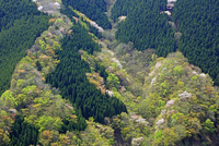 新緑の山肌 10731000190| 写真素材・ストックフォト・画像・イラスト素材|アマナイメージズ