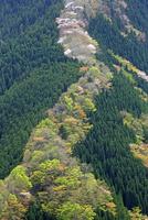 新緑の山肌 10731000212| 写真素材・ストックフォト・画像・イラスト素材|アマナイメージズ