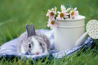 芝生の上のミニウサギとジョウロ