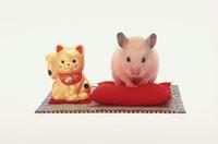 赤座布団の上のハムスターと招き猫