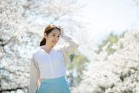 満開の桜を楽しむ若い女性