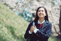 桜並木を歩く女子高生 10736005995| 写真素材・ストックフォト・画像・イラスト素材|アマナイメージズ