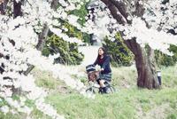 桜並木を自転車で走る女子高生 10736006084| 写真素材・ストックフォト・画像・イラスト素材|アマナイメージズ