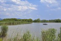 近江八幡の水郷 西の湖を行く和船と葦原