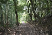 当尾石仏の道