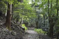 石畳続く滝坂の道(柳生街道) と春日山原始林 10737000165| 写真素材・ストックフォト・画像・イラスト素材|アマナイメージズ