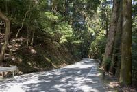 春日奥山道路と春日山原始林 10737000196| 写真素材・ストックフォト・画像・イラスト素材|アマナイメージズ