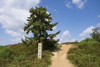 若草山山頂 鶯塚古墳と大きな松の木 10737000197| 写真素材・ストックフォト・画像・イラスト素材|アマナイメージズ