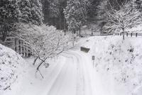 雪の奥比叡山ドライブウェイ(延暦寺西塔付近) 10737000213| 写真素材・ストックフォト・画像・イラスト素材|アマナイメージズ