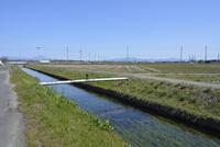 琵琶湖へと流れる針江大川