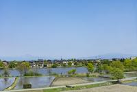 琵琶湖の内湖,乙女ヶ池と打下集落と琵琶湖