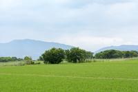 近江八幡の水郷と田んぼ