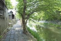 八幡堀沿いの石畳の道