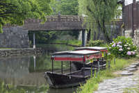 初夏の八幡堀,明治橋と船とアジサイ
