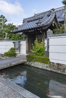 五個荘金堂の町並み,浄栄寺と水路に泳ぐ鯉・タテ写真