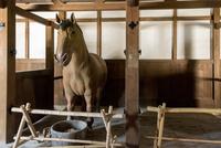 彦根城 馬屋内部と模型の馬 10737000290| 写真素材・ストックフォト・画像・イラスト素材|アマナイメージズ