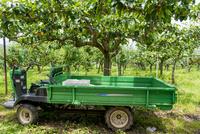 初夏の果樹園と作業用トラック