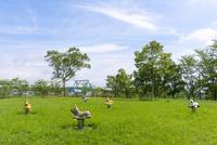 夏の公園とコアラ・ライオン・パンダ・トラ状の遊具