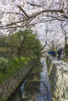 哲学の道と桜と琵琶湖疏水(タテ写真) 10737000315| 写真素材・ストックフォト・画像・イラスト素材|アマナイメージズ