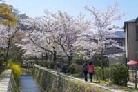 哲学の道と桜と琵琶湖疏水 10737000316| 写真素材・ストックフォト・画像・イラスト素材|アマナイメージズ