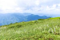 夏山の草原風景(晩夏から初秋の伊吹山)