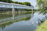 彦根城二の丸佐和口多聞櫓 堀と白鳥