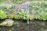 中山道醒井宿 居醒の清水と蟹石