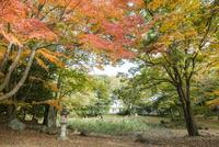 旧彦根藩松原下屋敷(お浜御殿)庭園の紅葉 10737000346| 写真素材・ストックフォト・画像・イラスト素材|アマナイメージズ