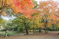 旧彦根藩松原下屋敷(お浜御殿)庭園の紅葉 10737000347| 写真素材・ストックフォト・画像・イラスト素材|アマナイメージズ