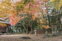 旧彦根藩松原下屋敷(お浜御殿)庭園の紅葉 10737000349| 写真素材・ストックフォト・画像・イラスト素材|アマナイメージズ