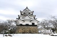 雪の彦根城 10737000357| 写真素材・ストックフォト・画像・イラスト素材|アマナイメージズ