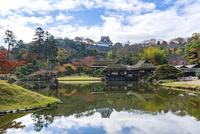 紅葉の玄宮園と彦根城 10737000367| 写真素材・ストックフォト・画像・イラスト素材|アマナイメージズ